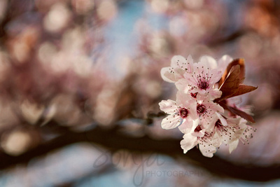 Tri-City Spring