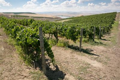 Claar Winery