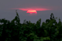 Red Sun through the Vines